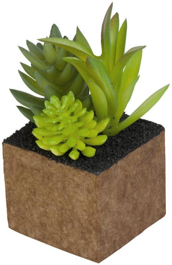 Växt Konstgjord mini Kub Cult Design